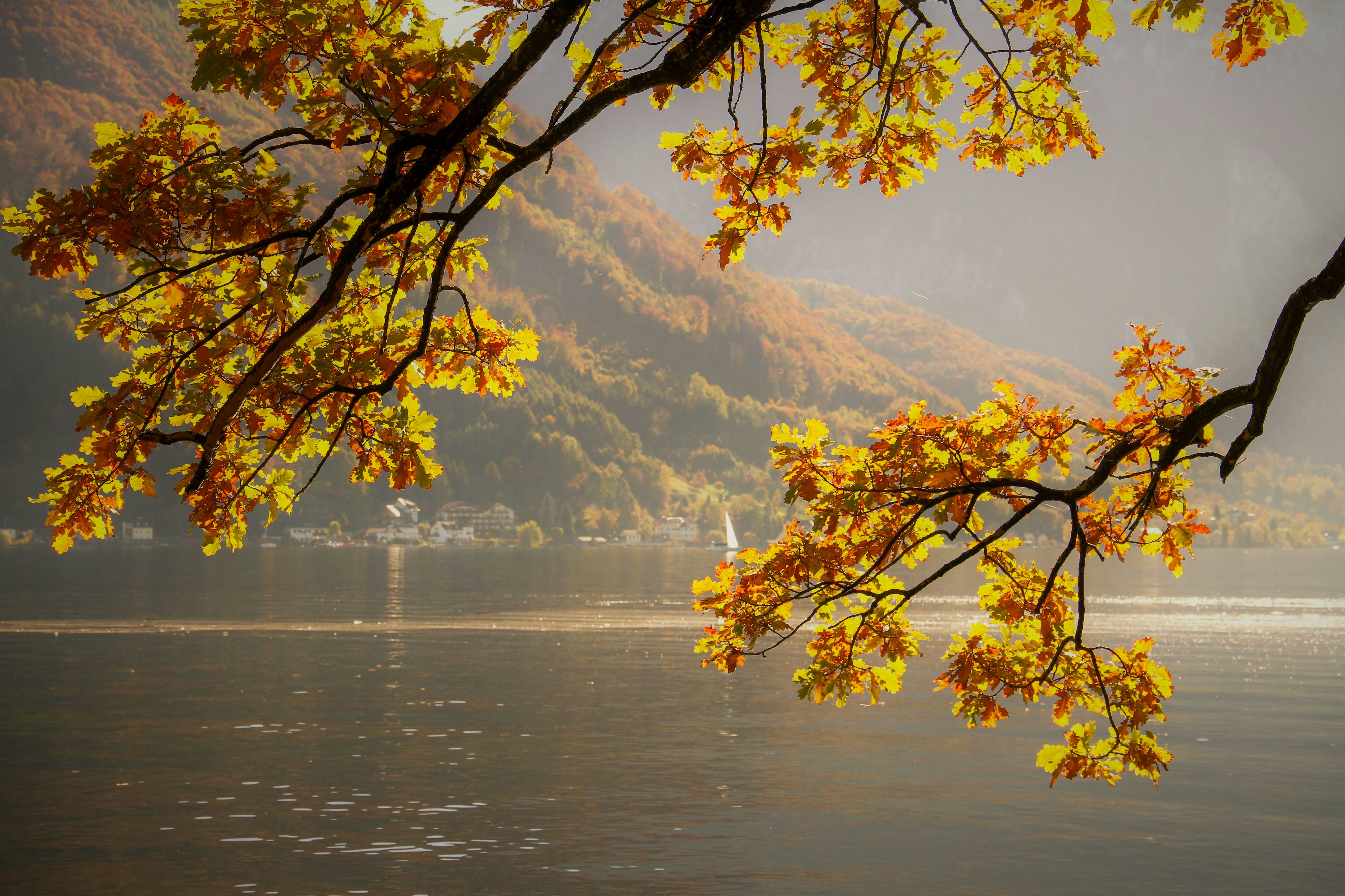 autumn, lake, fall leaves, yellow, bright,