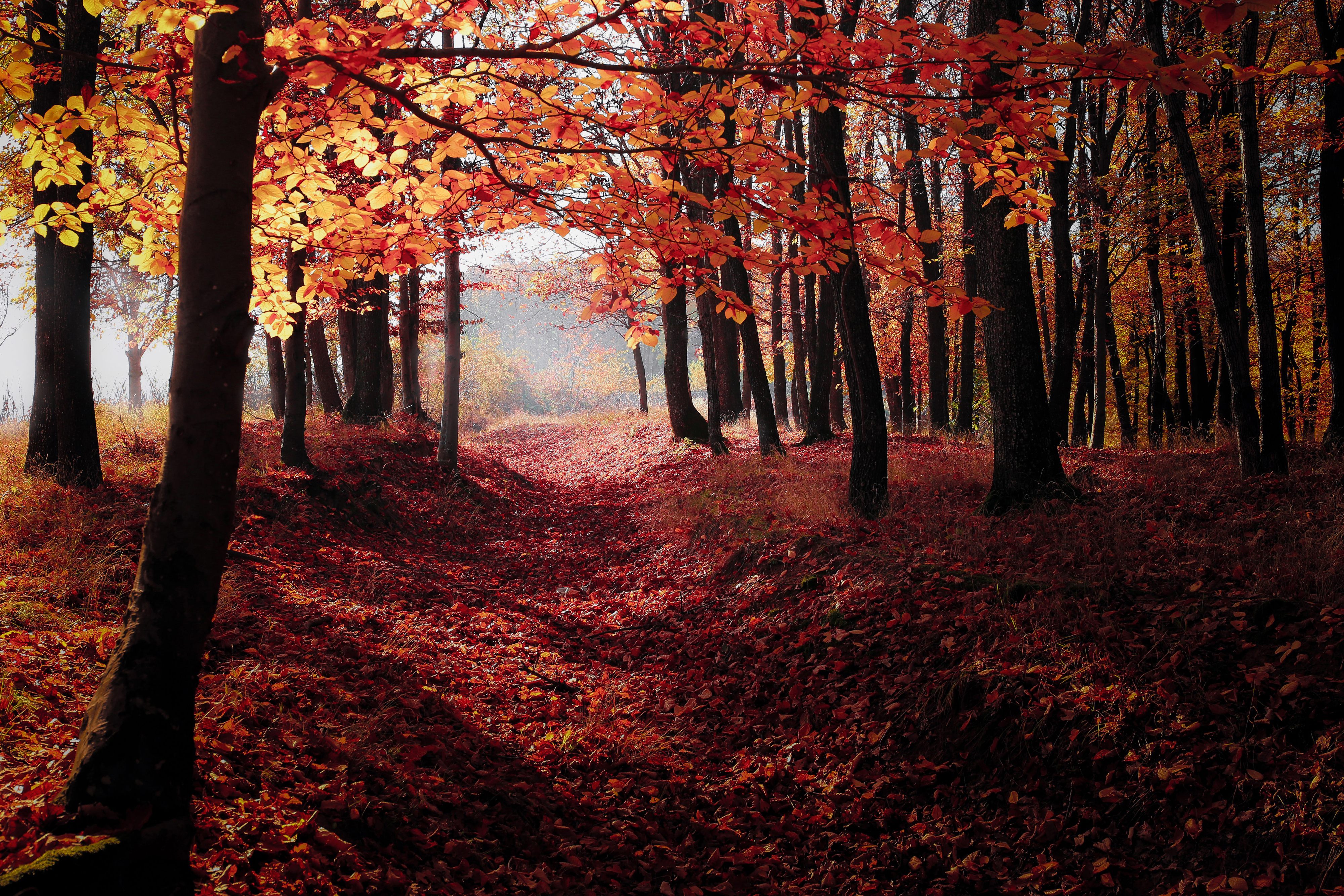 Autumn,backit,dawn,forest,natural