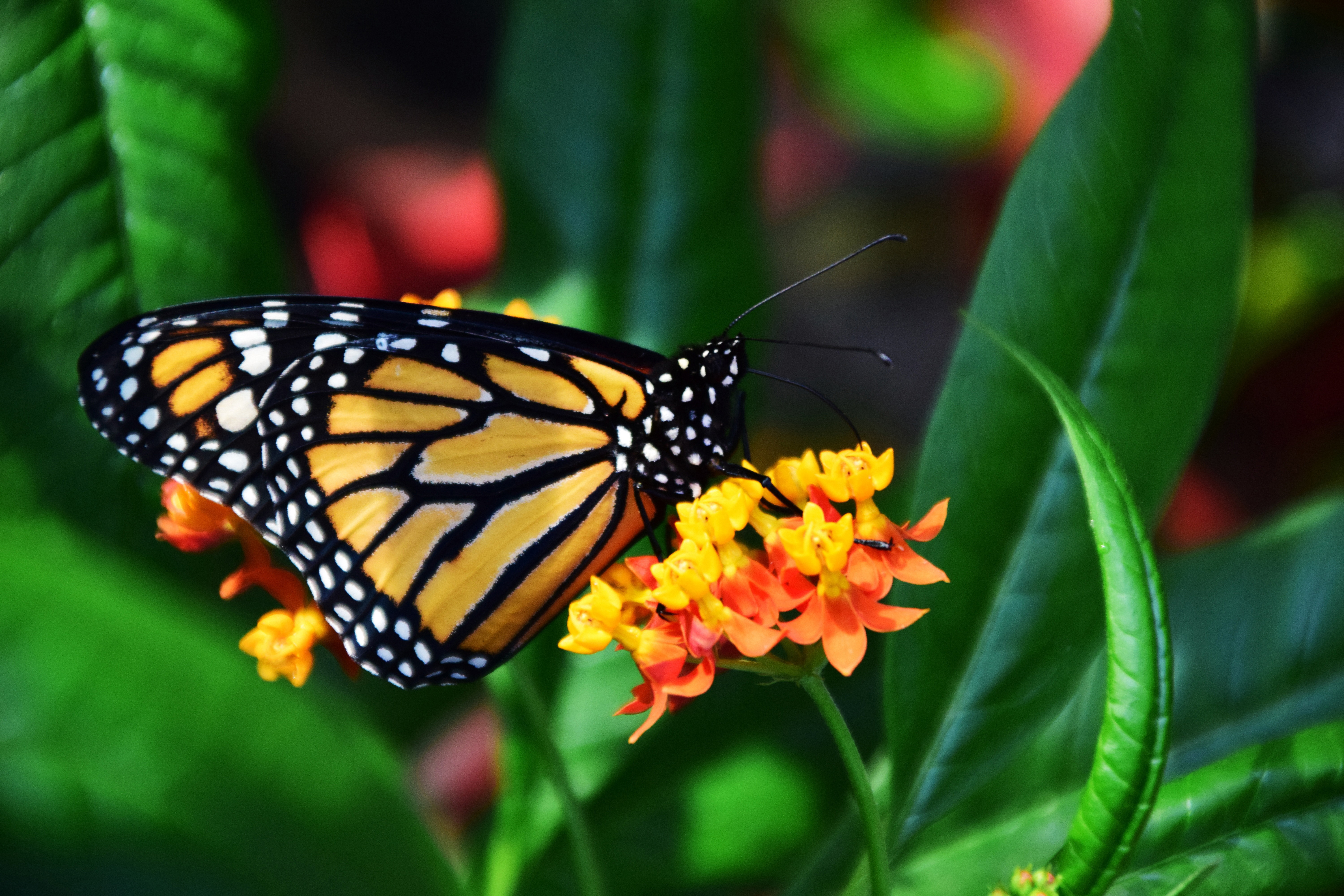 Beautiful butterfly colorful