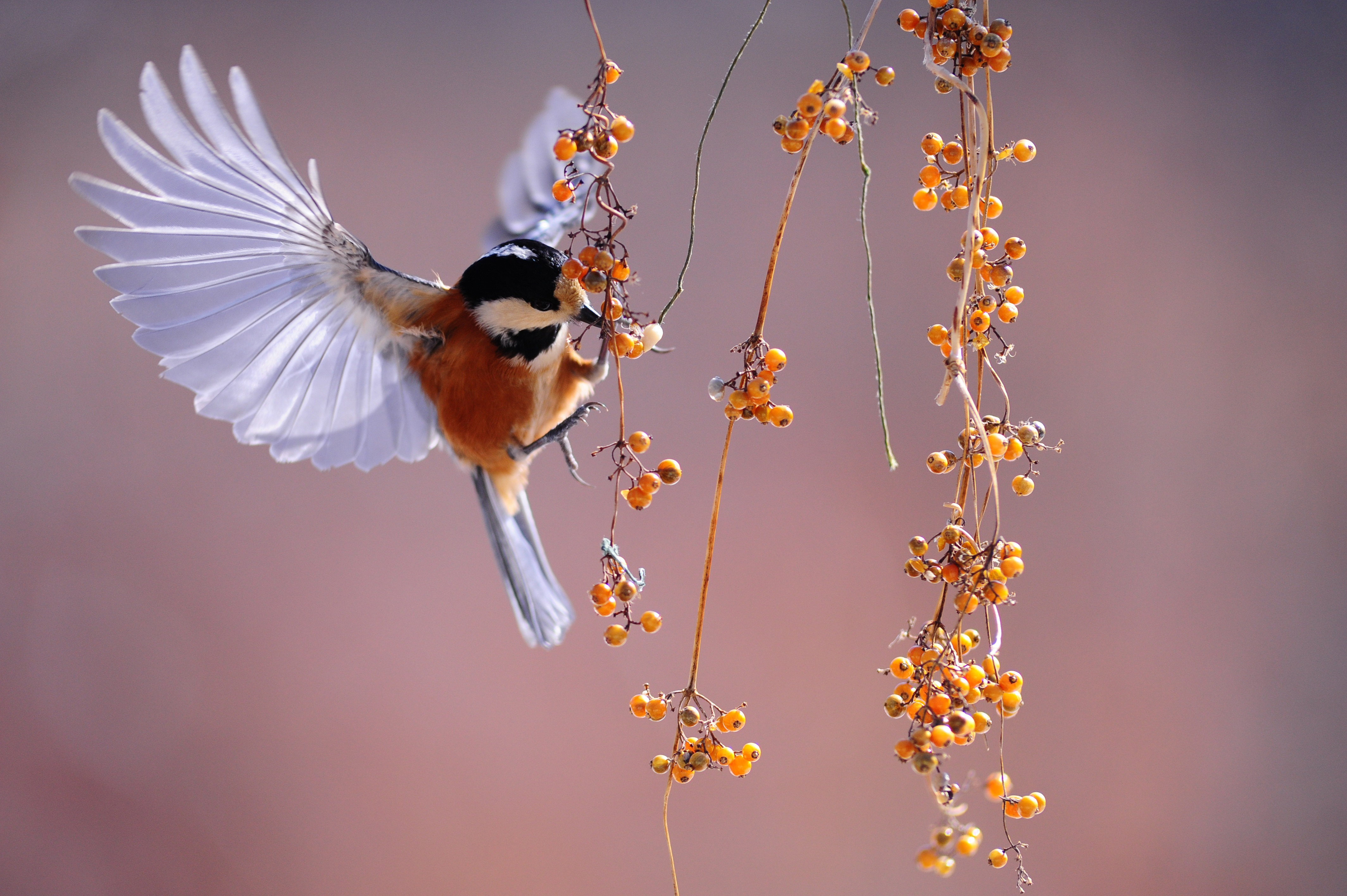 bird, wings, nature, small,