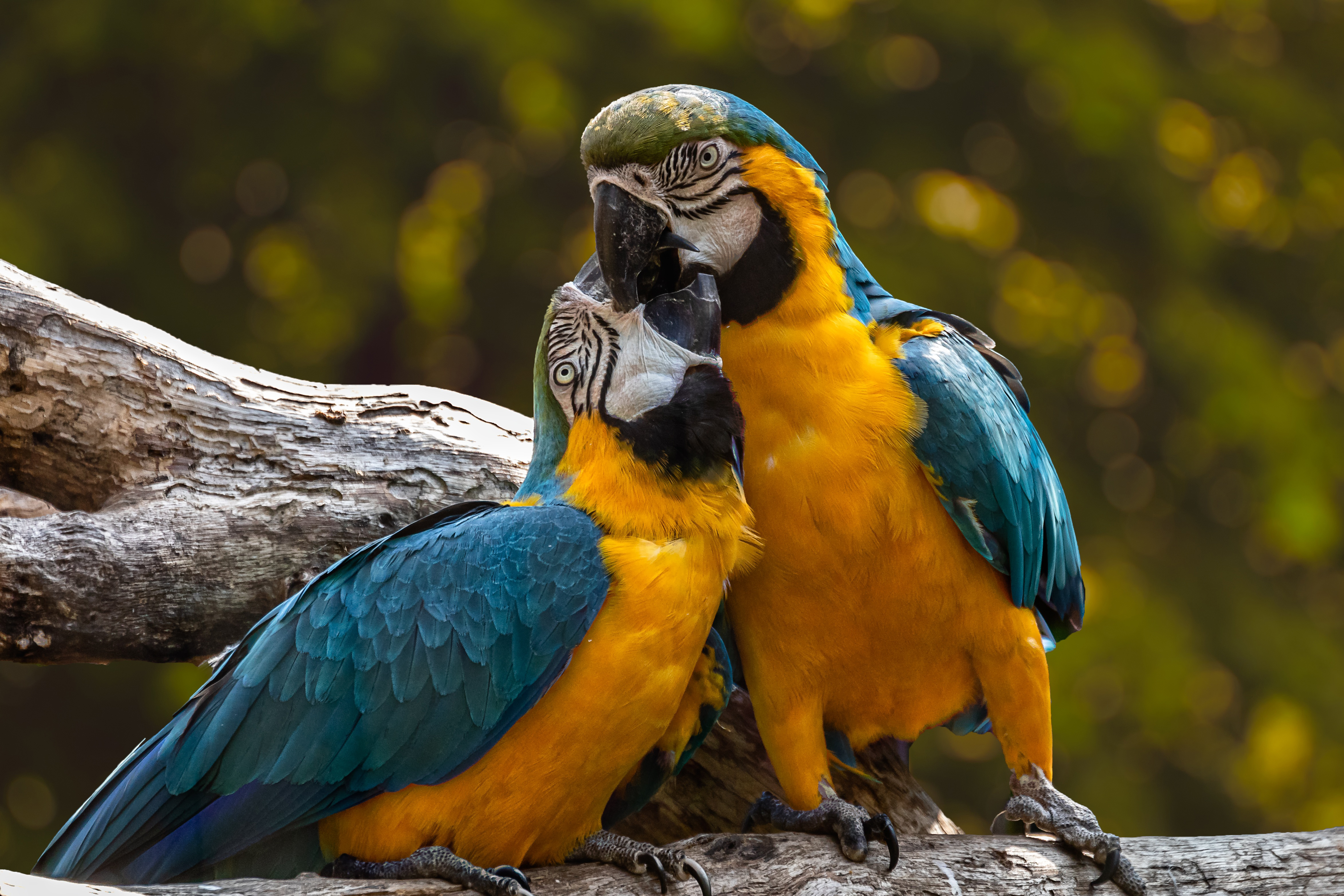 parrots, exotic, romantic, animal, love,