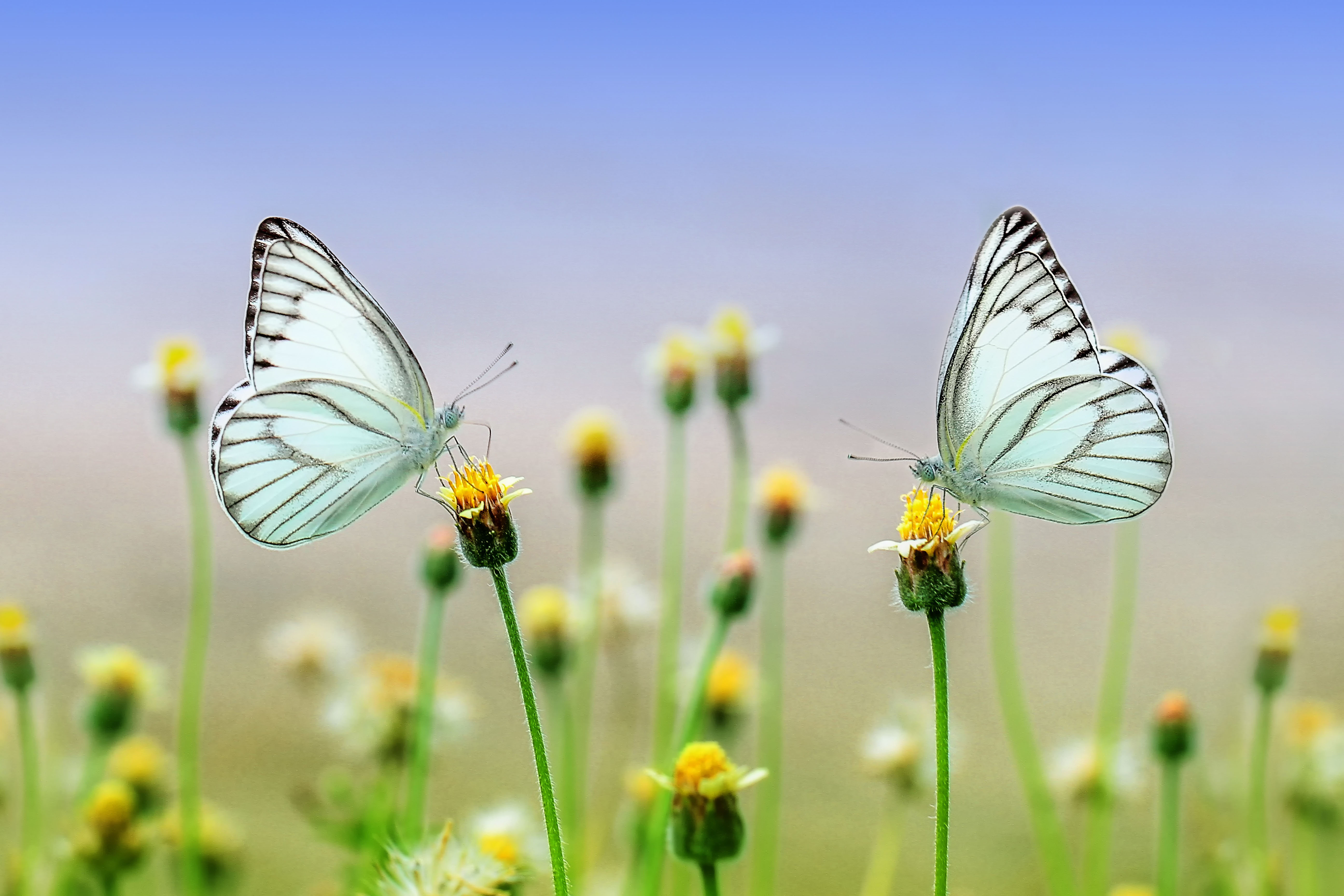 butterfly,flower,nature,spring