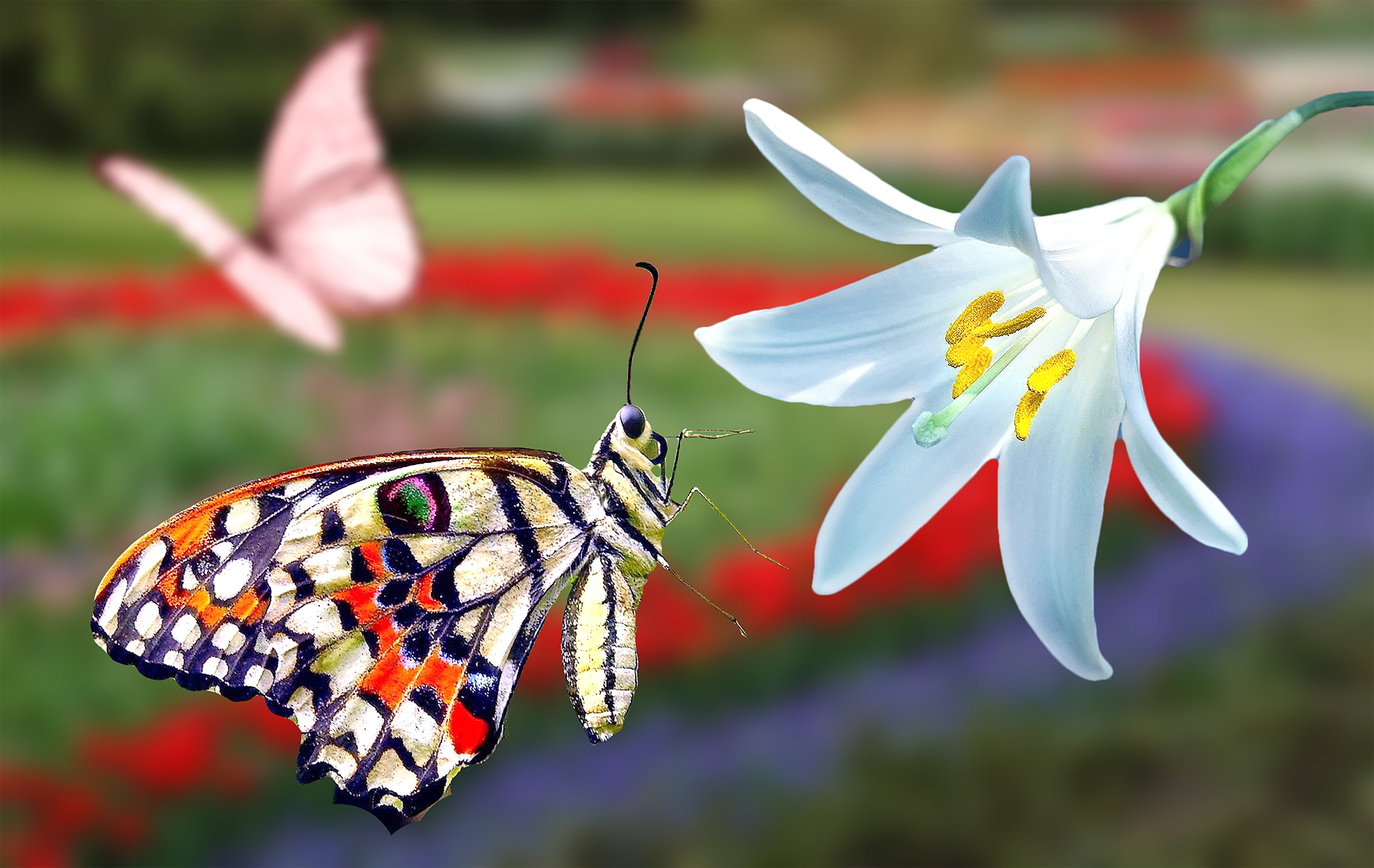 butterfly, garden, spring, beautiful, white,