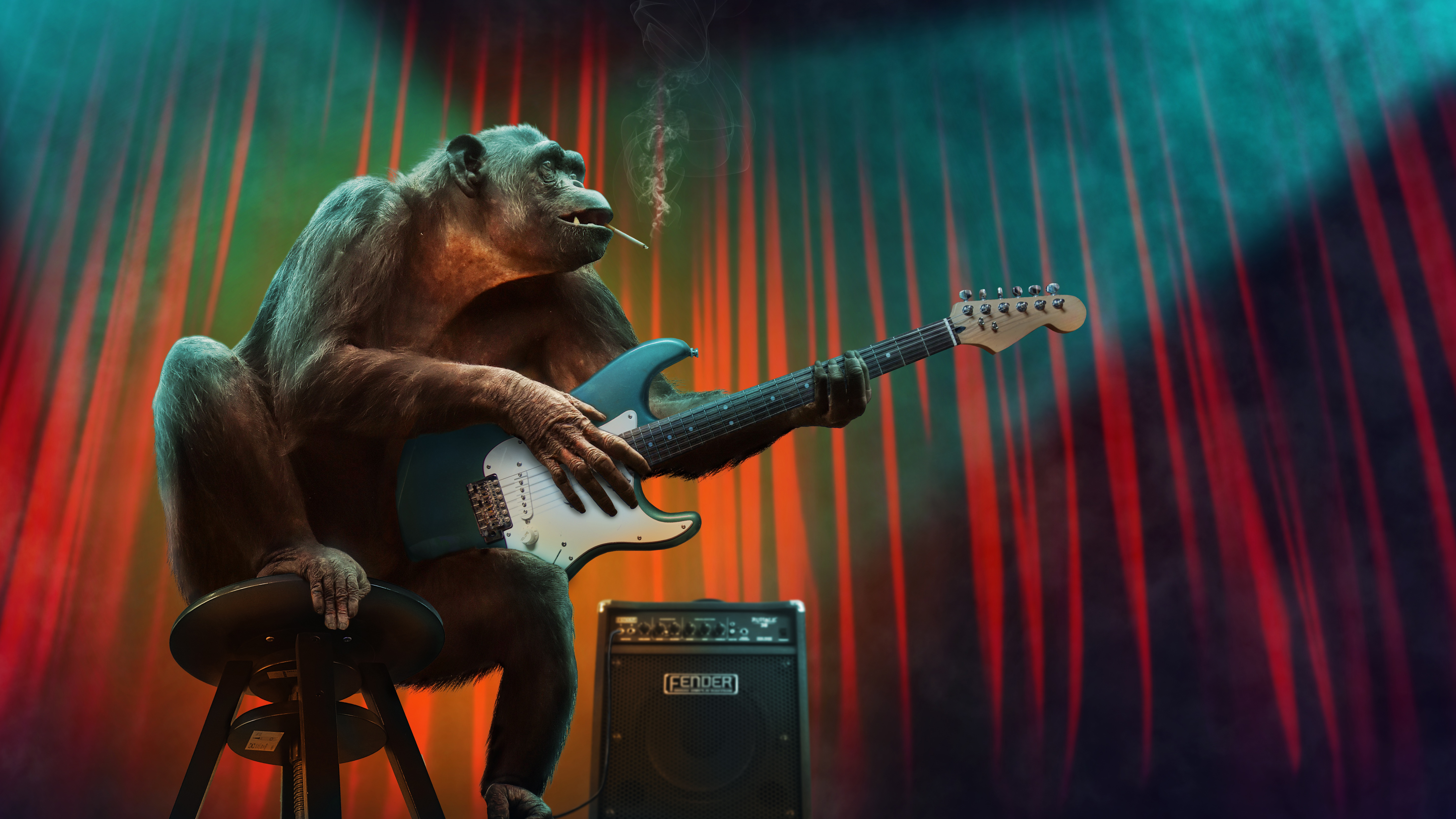 concert, guitar, stage, chimpanzee,