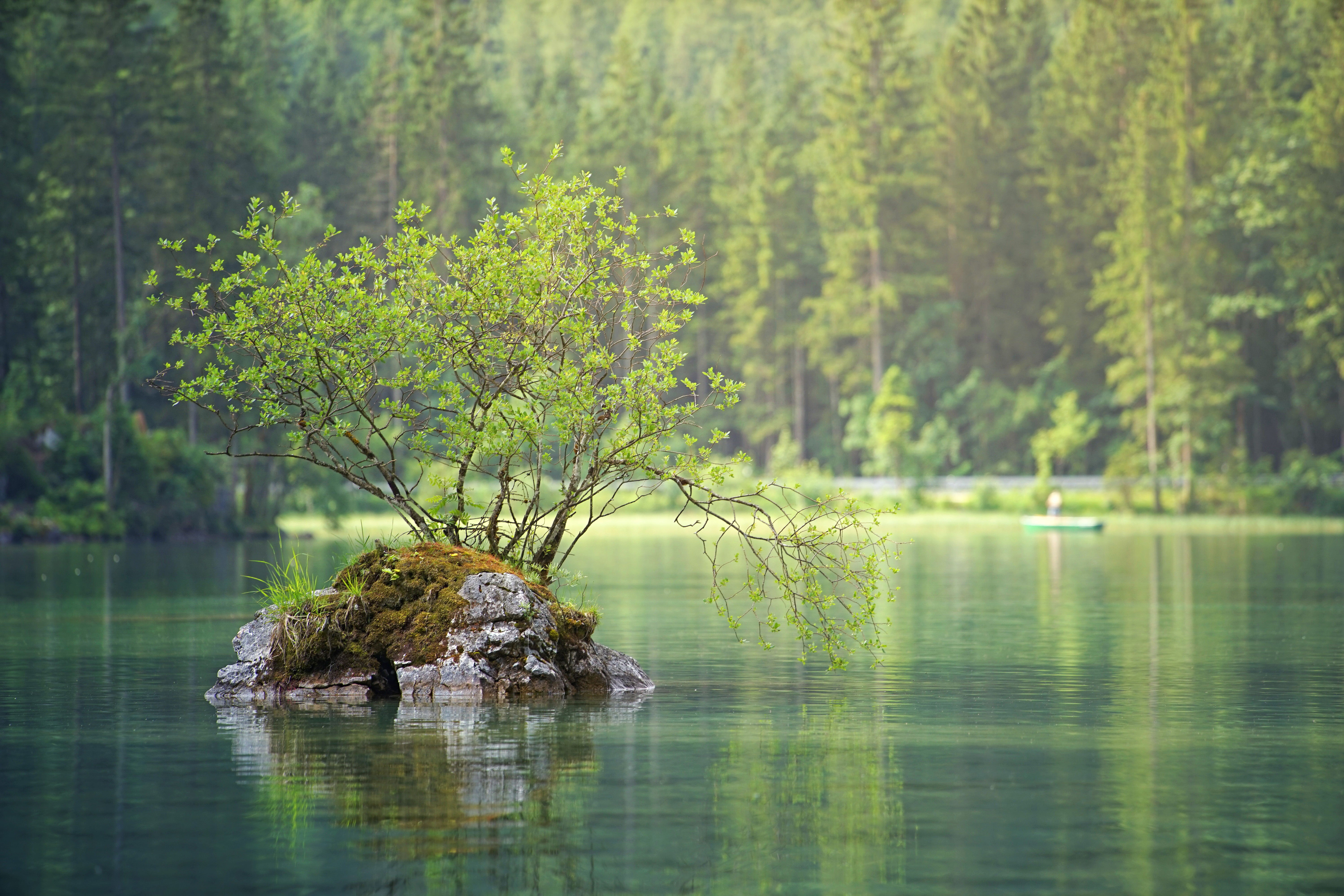 Coniferous forest,nature,water,pond