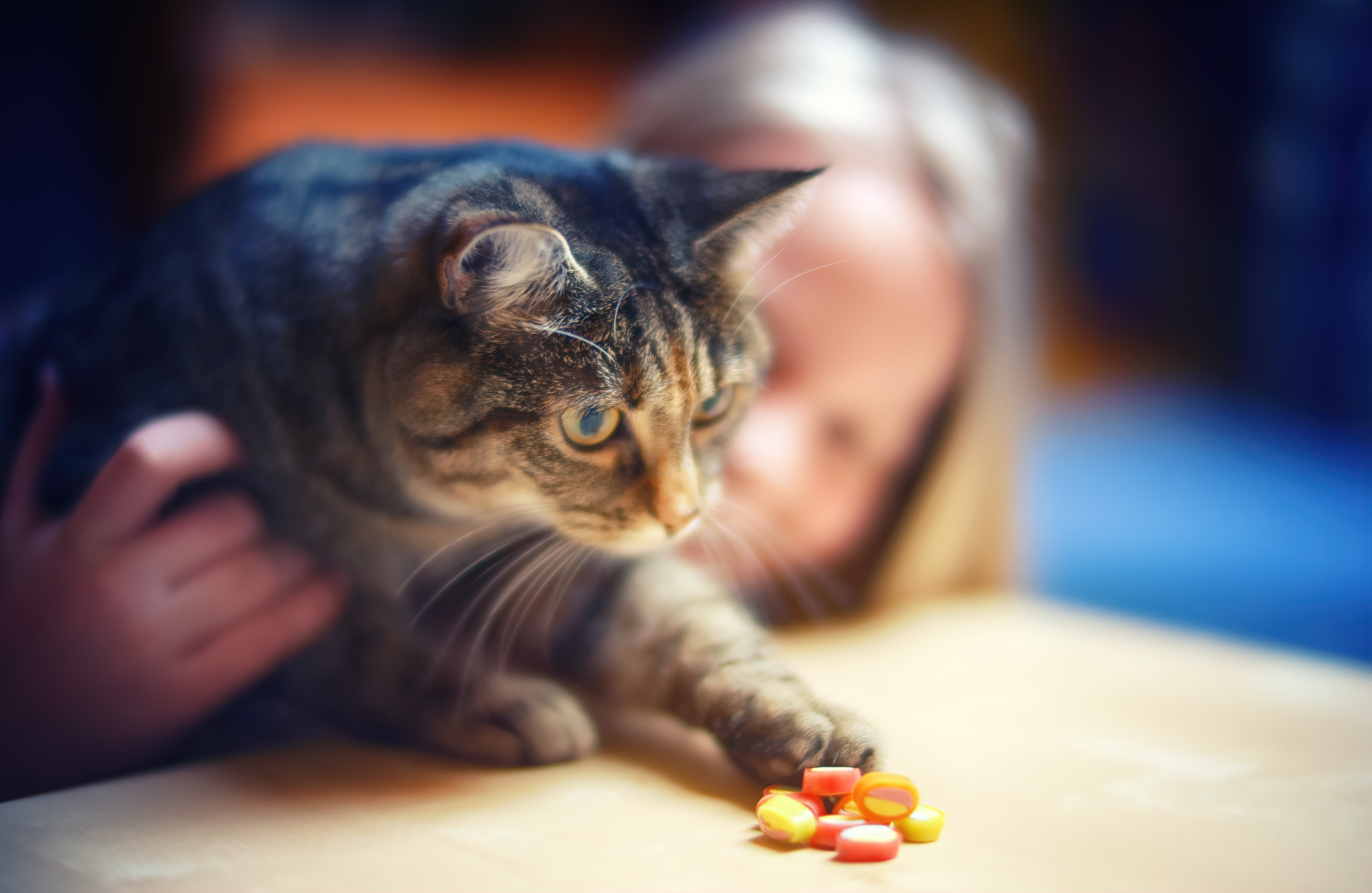 sweet tooth,cat,eyes, candy,girl,cute