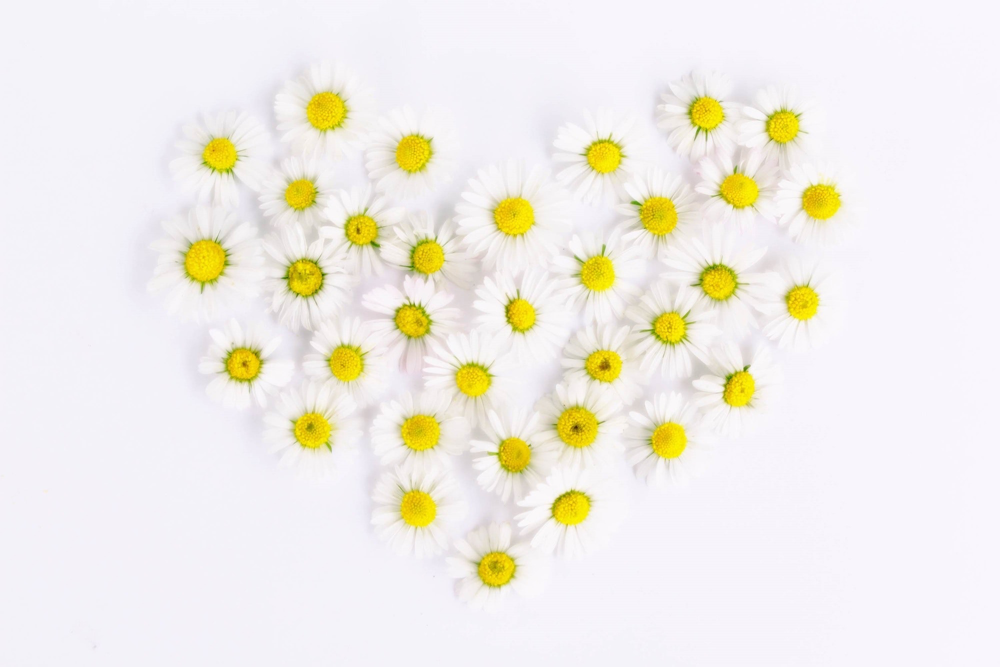Daisies, flowers,heart,nature,white