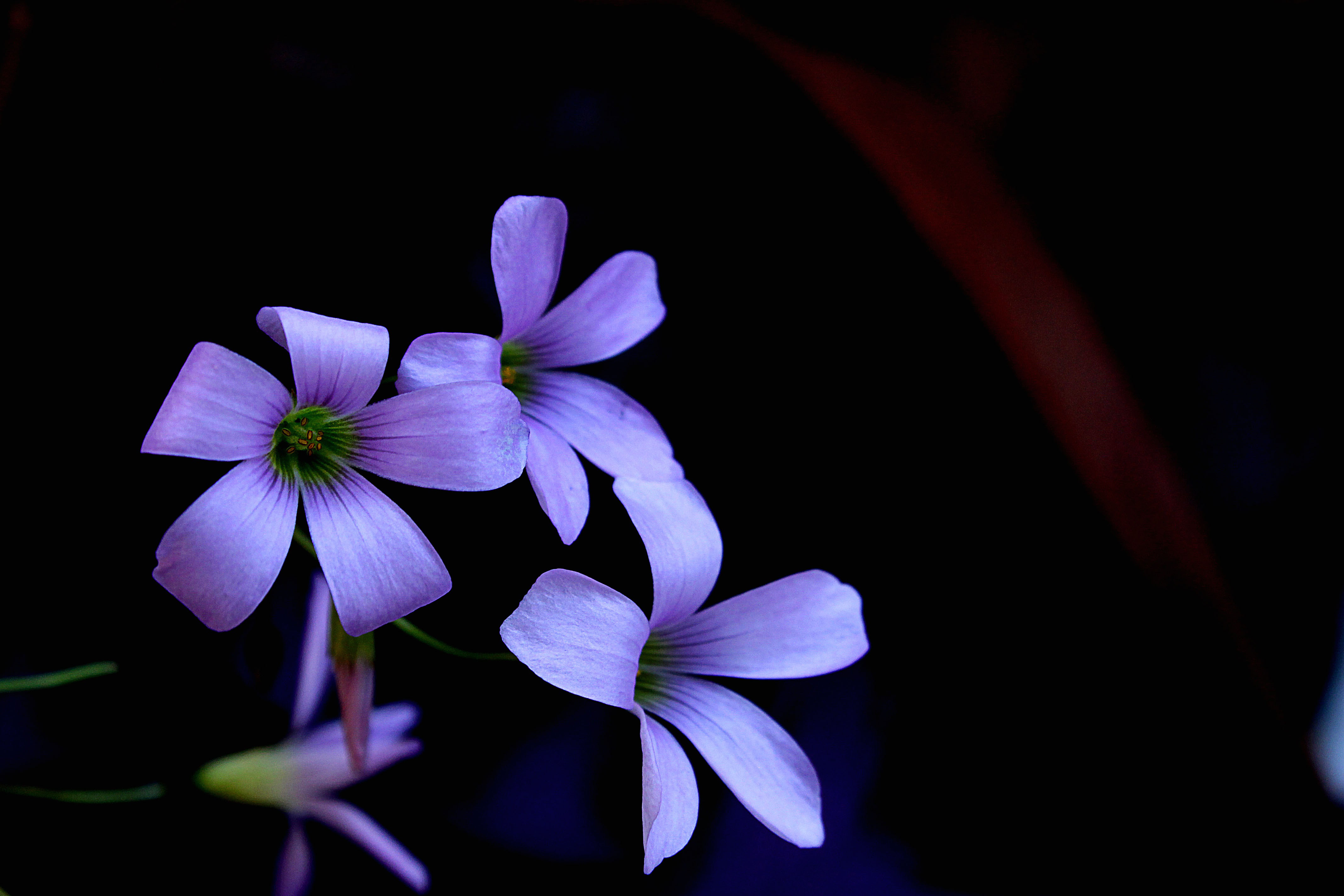 Flower,garden,nature,dark