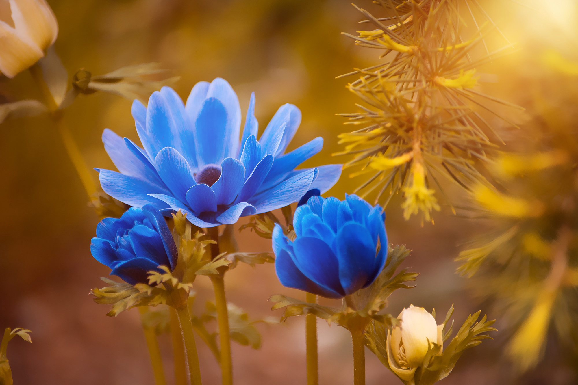 Flower, blue, nature, bloom, petals