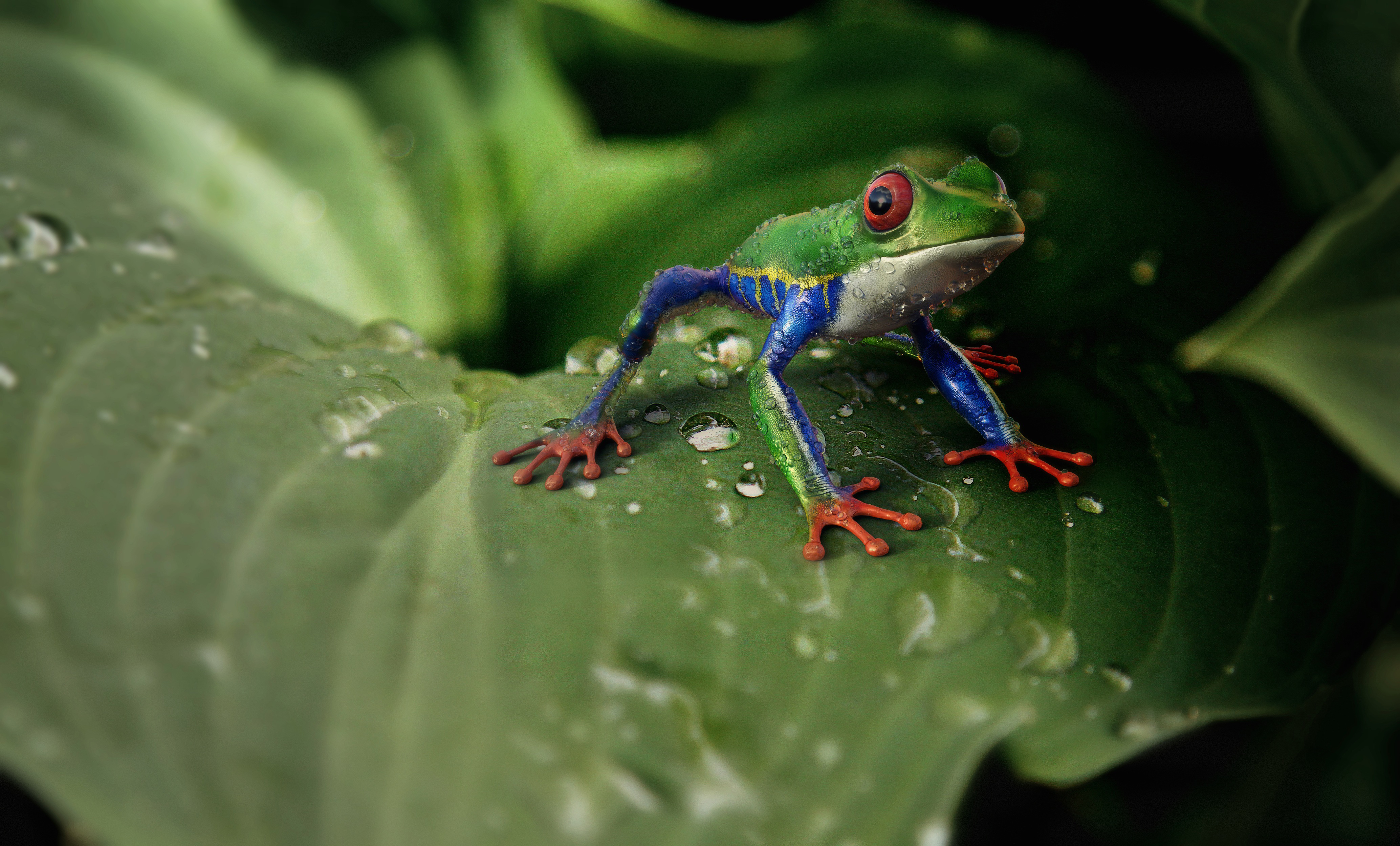 Frog, animal , exotic, nature, plant