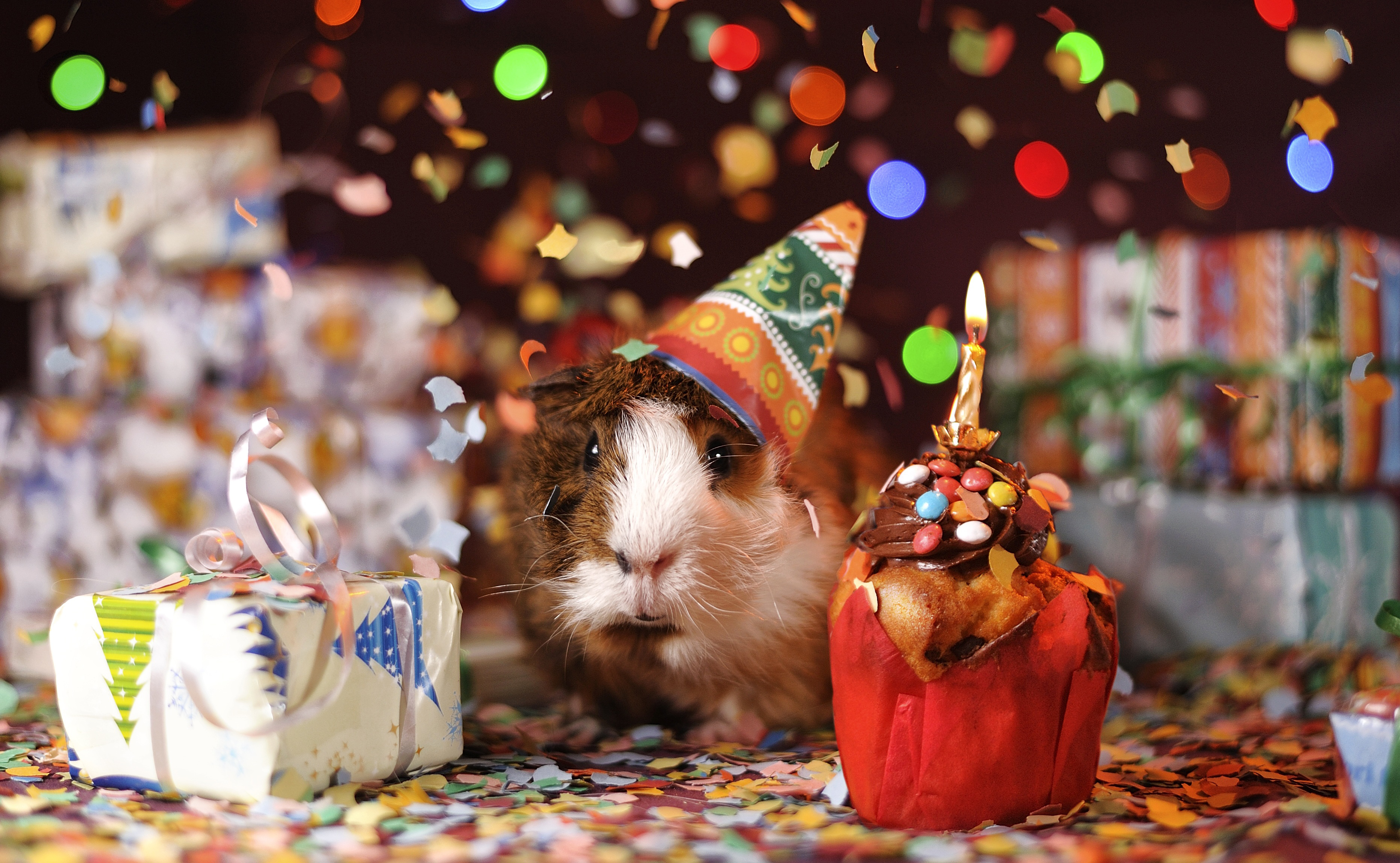 happy birthday, animal, cute, small, pig, colorful,