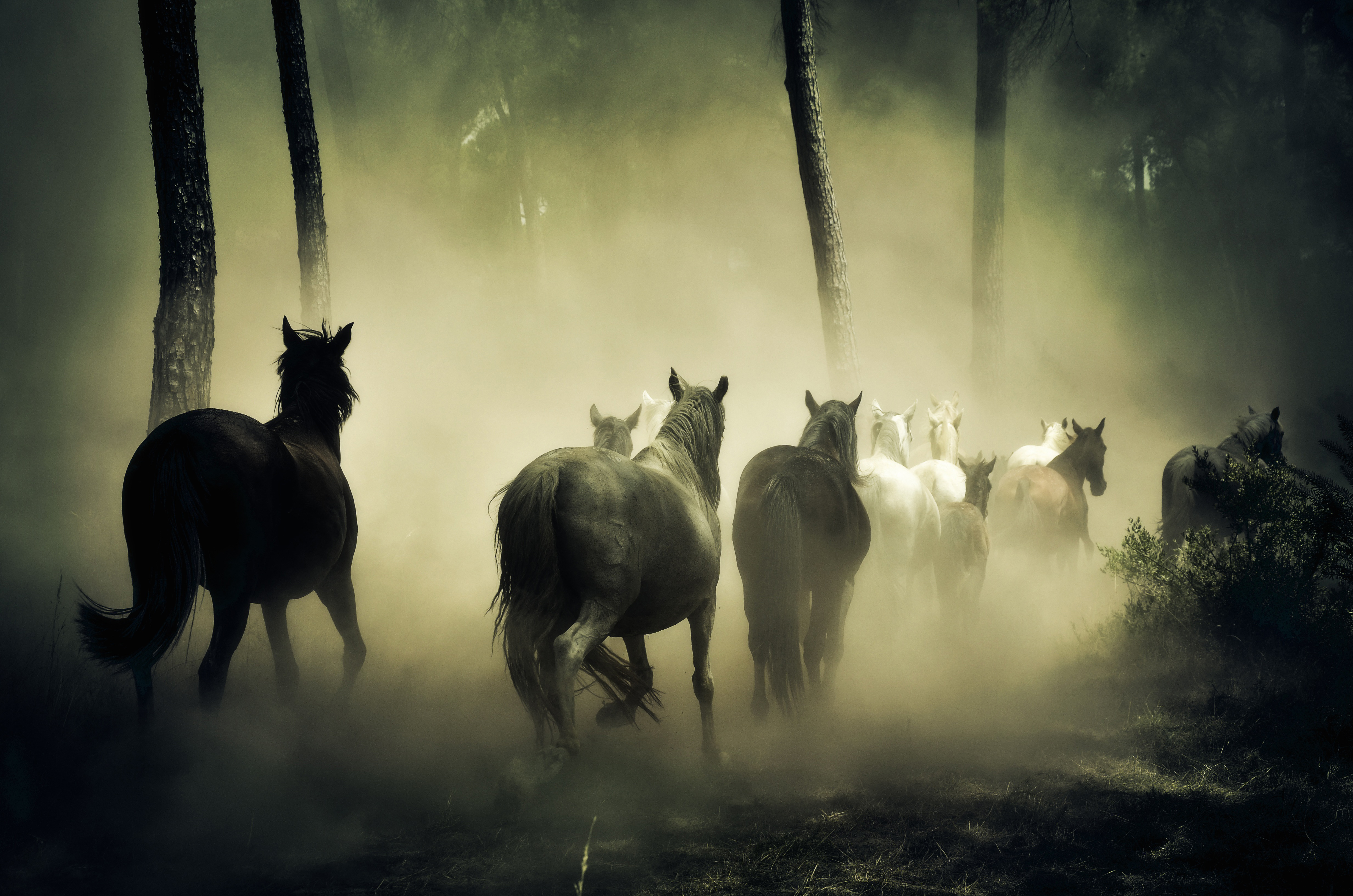 flock, horses, nature, run