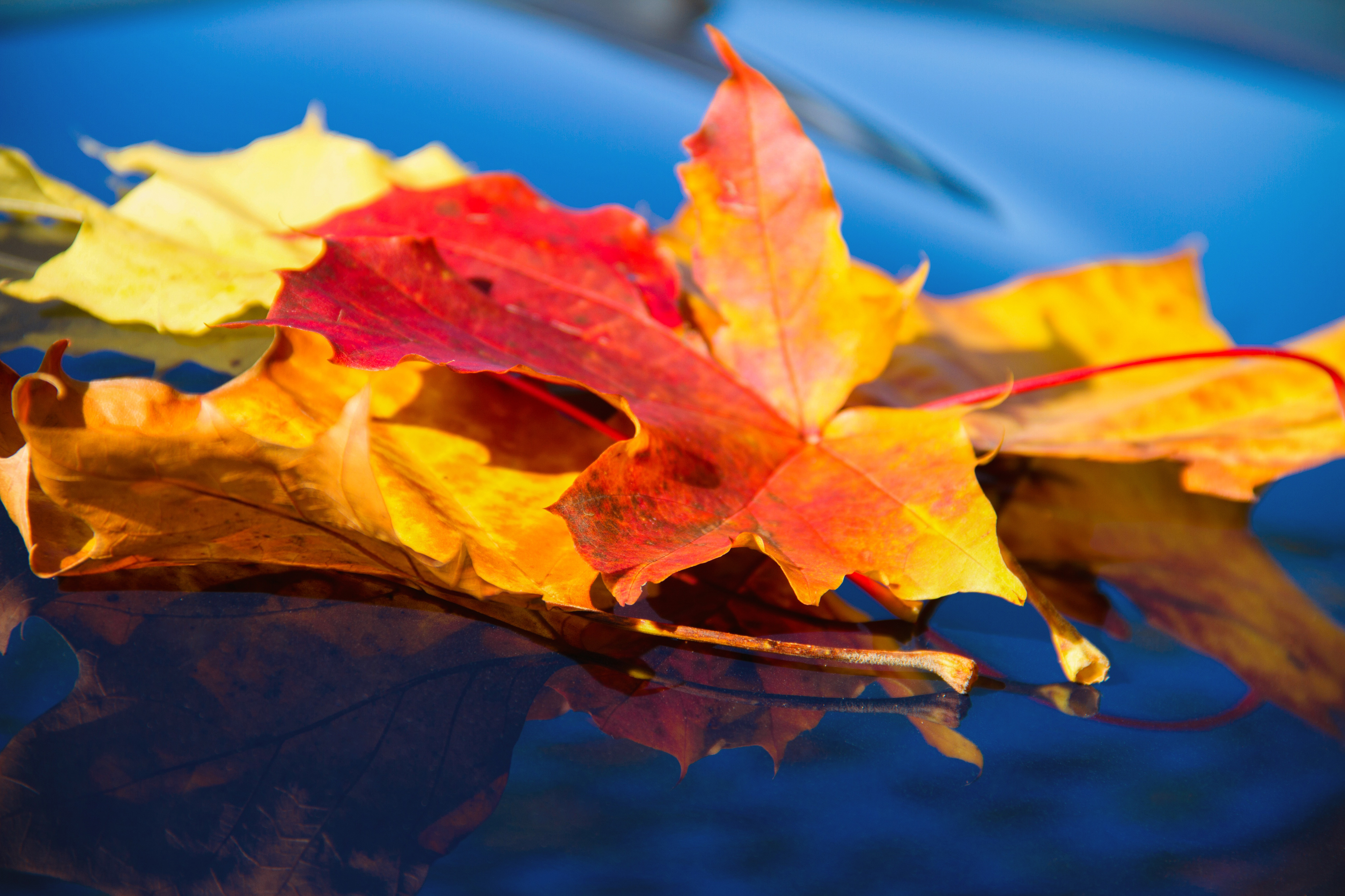 leaf, autumn, fall leaves, leaves, yellow,