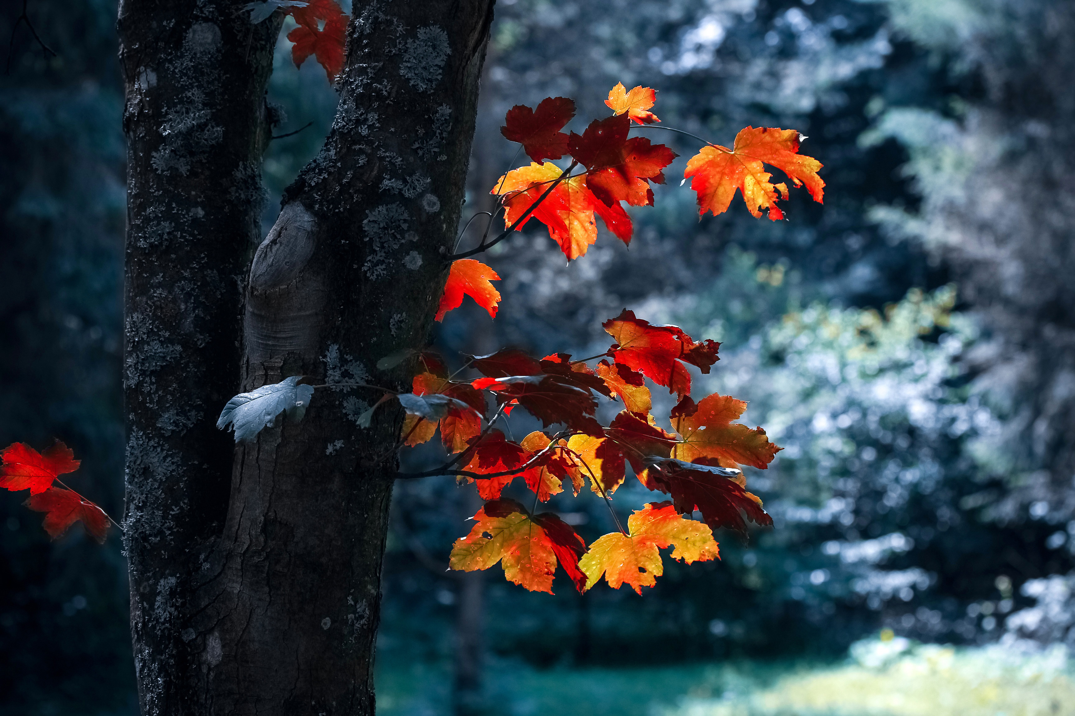nature, season, light, tree, color,