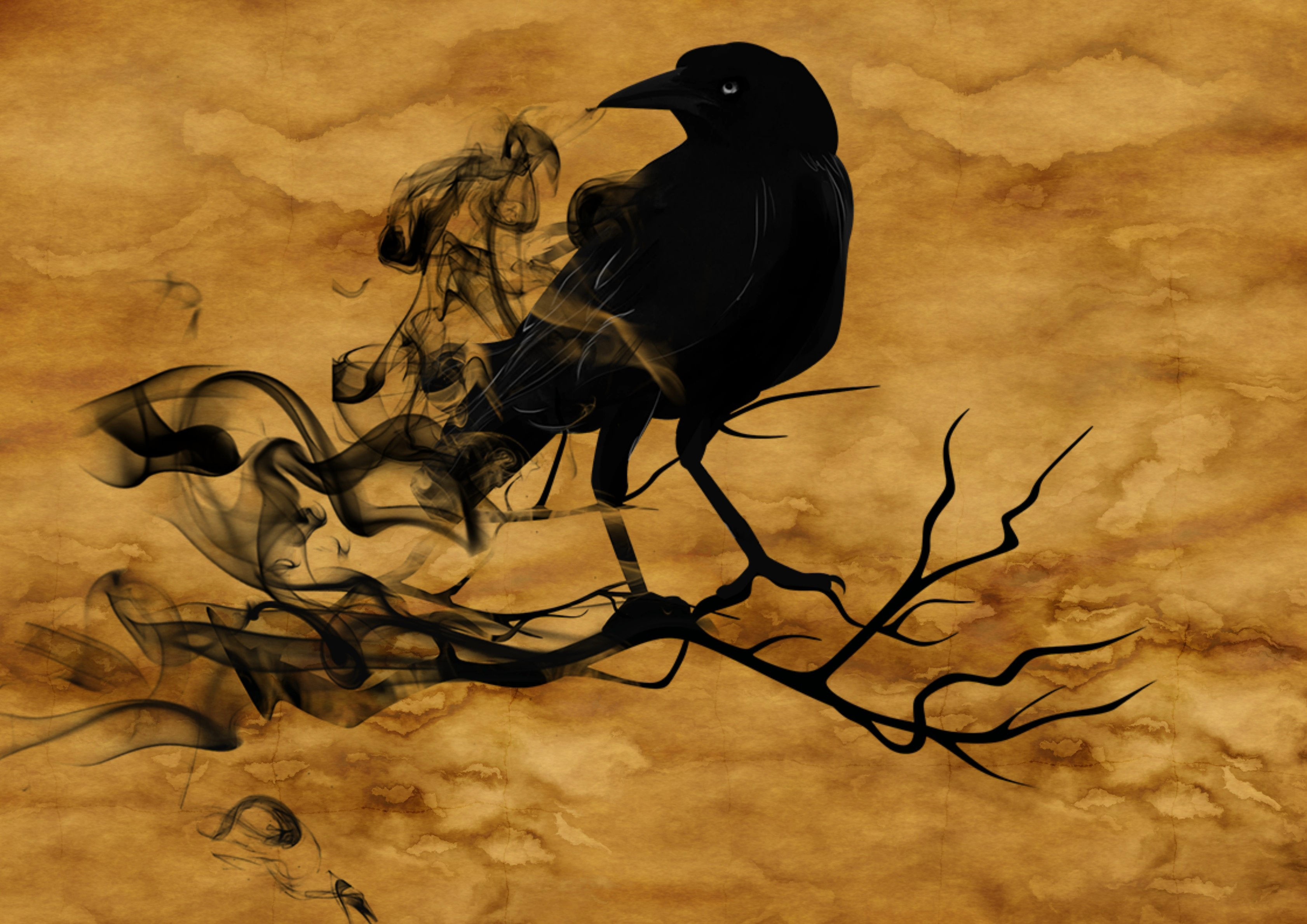 Raven crow, creepy, halloween, fear