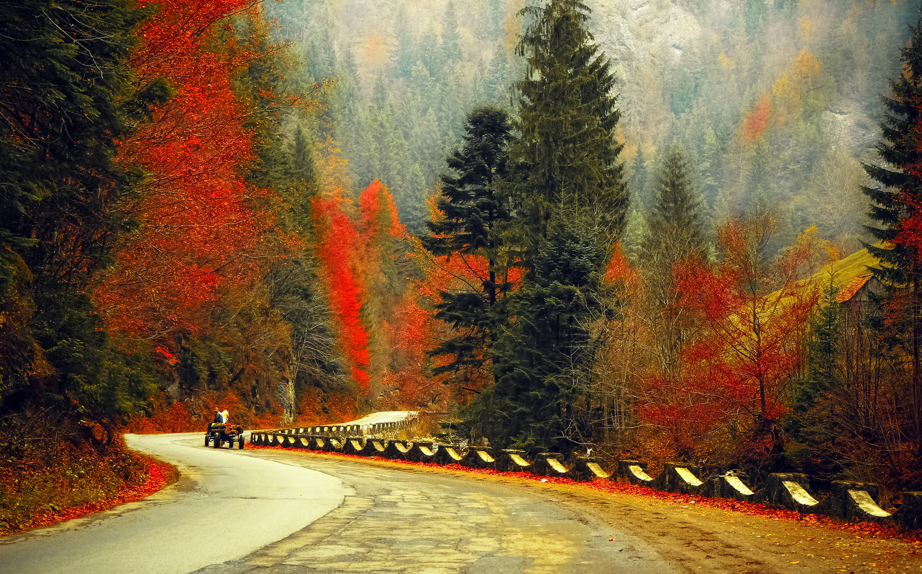 road, autumn, forest, landscape, trees,
