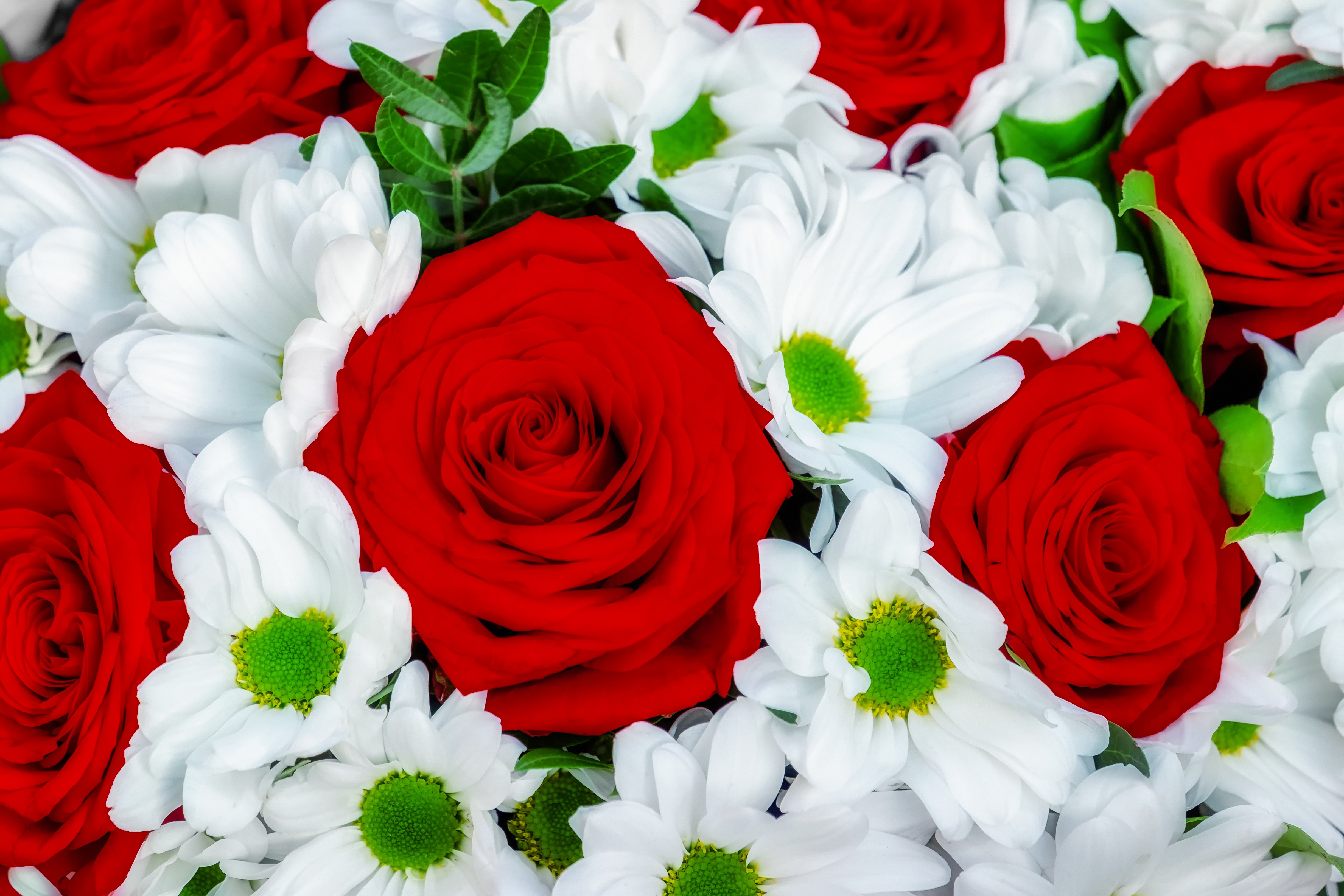 roses, daisy, bouquet, mother day, love, red, white,