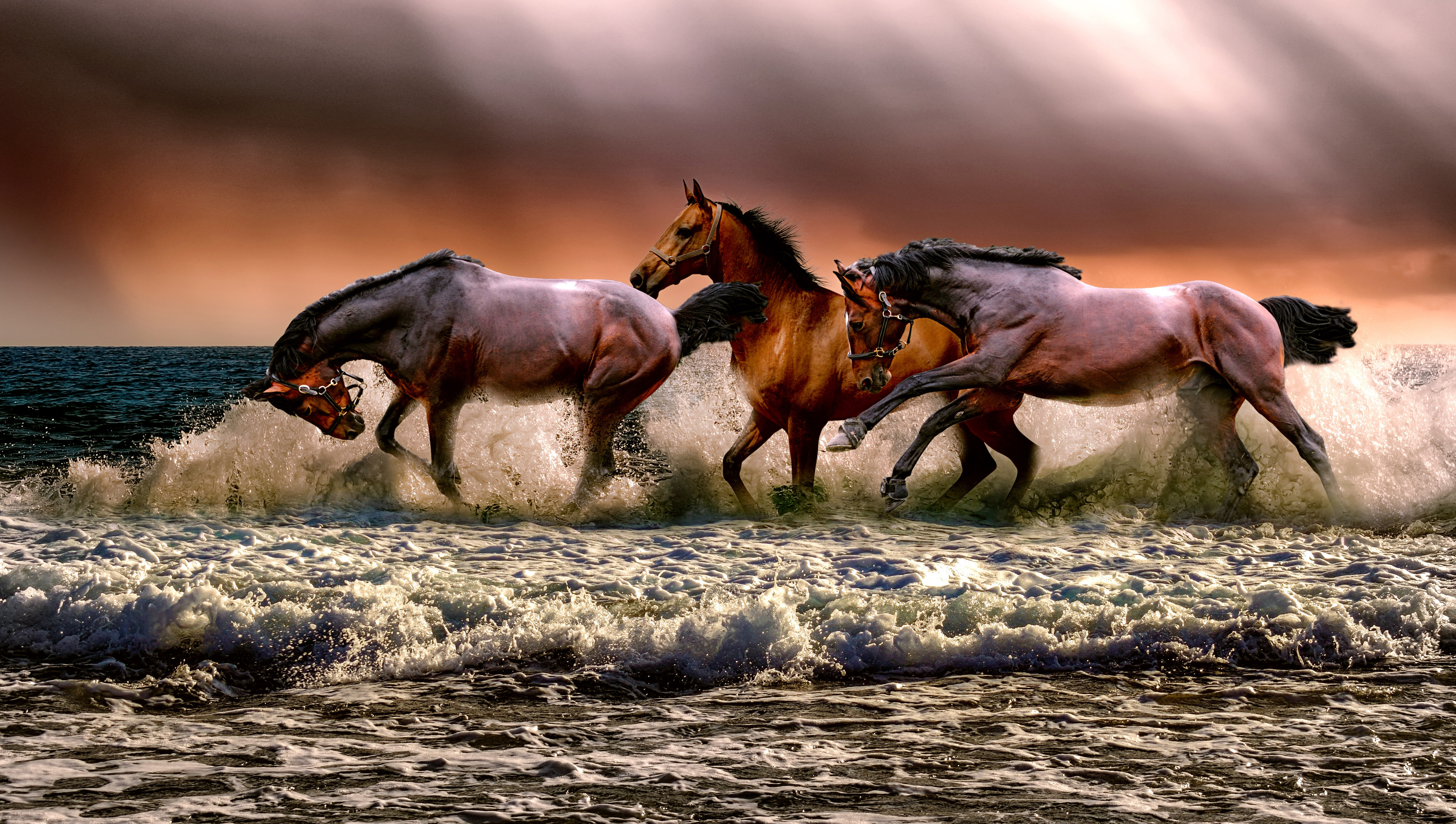 Runing horse,horse,water,nature