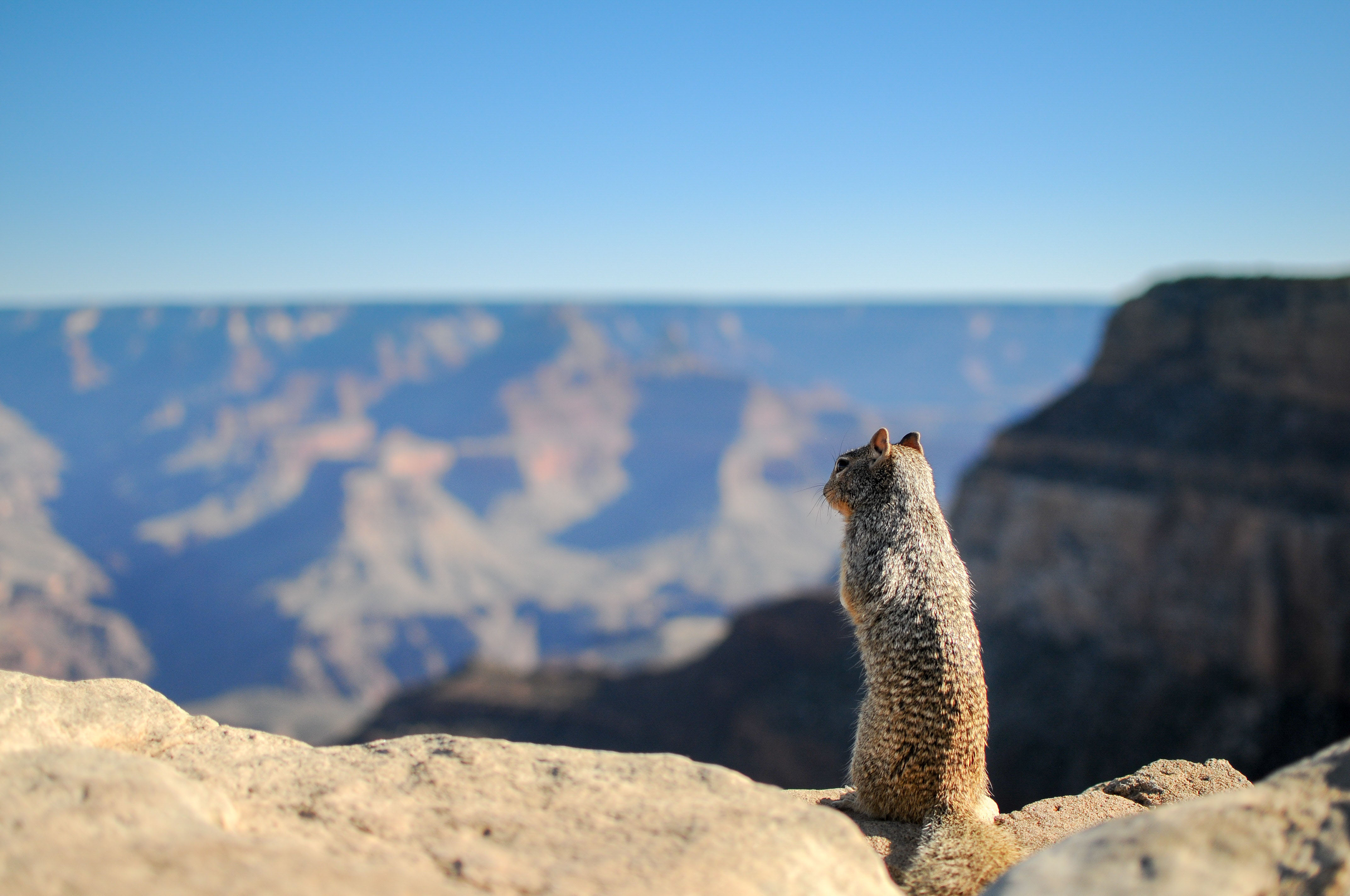 Squirrel,valley,top,view
