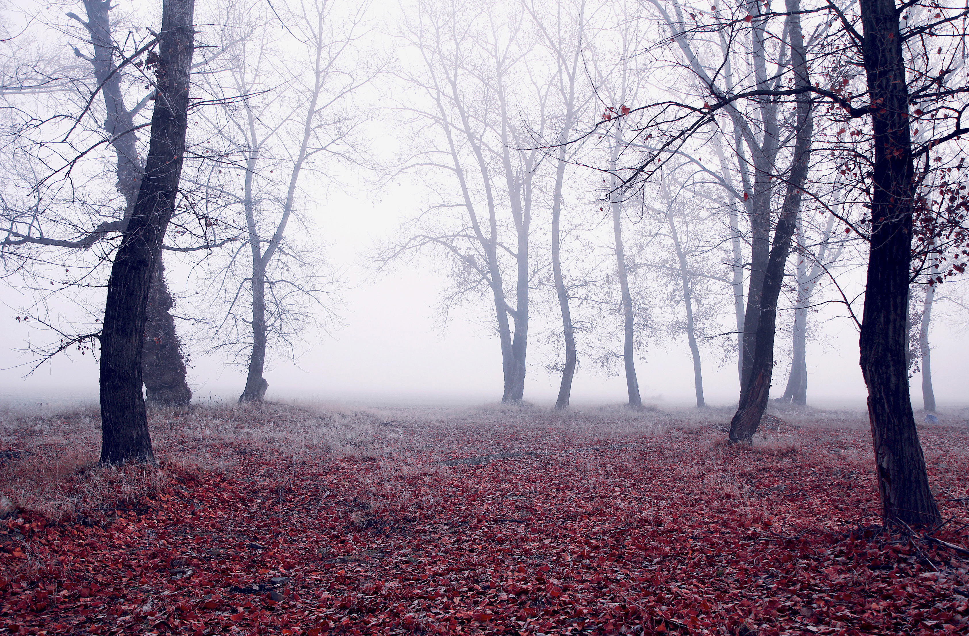 tree, wood, fog, weather, mist, fall,